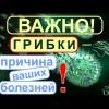 Грибки- паразиты. Плесневые, дрожжевые грибки- микромицеты вызывают полипы, онкологию и т.д..