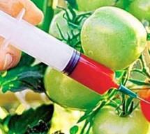Давайте разберемся с… ГМО