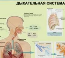 Фролов Ю. А. Вебинар от 13 мая  на тему: «Дыхательная система, ухо, горло, нос – болезни – лечение»…