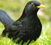 «О Хлебе и Птицах»