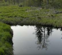 Плодородие земли, восстановление живой почвы. Фролов Ю.А. 06.04.16. Земледелие и не только.