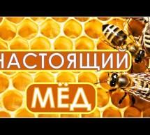 Настоящий лечебный мёд — любимое дело жизни. В гостях у Фролова Ю.А. честные пасечники.