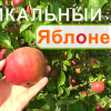 Мичурин современности! Яблоневый сад. Фролов в питомнике у профессора Агеева- Сентябрь.