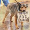 Помогите принять закон для защиты животных!