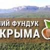 Фундук из Крыма в скорлупе. Лучший, вкусный органический Фундук