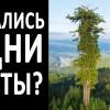 На земле нет Лесов. Нет деревьев старше 200 лет!? Допотопные леса, деревья! Углерод и Кремний!