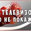 Паразиты. Глисты. Гельминты в организме человека. Жизненно важно знать всем! Смотрите!