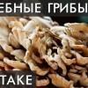 ГРИБ МЕЙТАКЕ. Женский гриб! Уникальные лечебные свойства высших грибов. Фролов Ю.А.