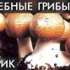 ГРИБ Агарик Бразильский. № 1 от Рака. Лечит грибок ногтей, Почки, Лимфу и не только…