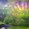 Аквариум — Озеро. Нужен сотрудник аквариумист! Новое направление Фролова Ю.А.