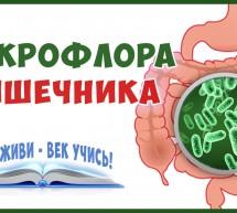 Дисбактериоз Кишечника. Микрофлора. ЖКТ. Пора восстановить своё Здоровье!