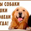 ЧУДО — Корм для Кошек и Собак. Излечение больных кошек и собак питанием!