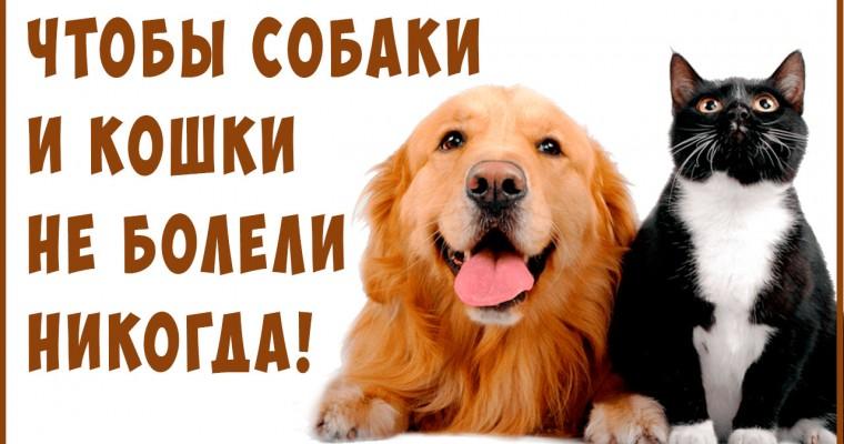 Лечебные корма для Кошек и Собак. Излечение питанием! Веганские и СЕ корма.