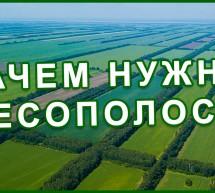 Здоровый ЛЕС — главное богатство страны и народа! Каменная степь. Фролов Ю.А.