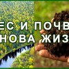 Лес и Почва. Экология. Заповедник. Голод. Засуха 1891, 1921, 1946 г. Жизнь.
