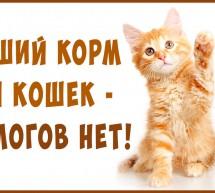 Лучший Корм Кошкам — для Здоровья и долголетия! Это не чудо — а жизнь!