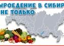 Сыроедение в Сибири! Что есть зимой в Сибири? Китайская зелень в магазинах.