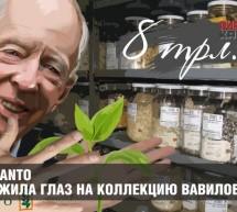 Из России вывозят коллекцию семян Вавилова. Получатель – генный банк Ротшильдов
