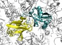 Письмо зрителя о «незаменимых белках»