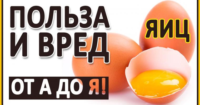 ЯЙЦА. Польза и вред Яиц! Полный разбор! D3, В12, желтки, белки, В12, Омега 3, холестерин.