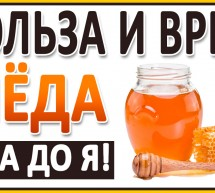 МЁД от А до Я! Самый полезный мёд. Всё о мёде: Хранение, нагрев, кариес, мера, качество. Дикий мёд.