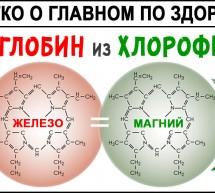 Гемоглобин и Хлорофилл. Железо и Кровь от А до Я! Гемоглобин синтезируется из хлорофилла! Эритроциты