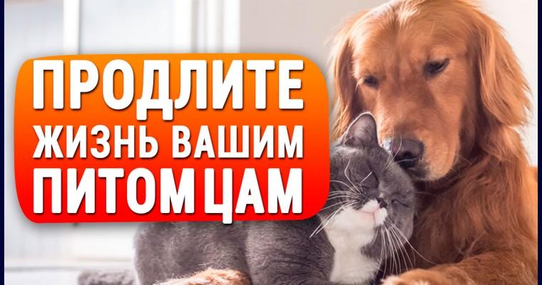 Единственный в мире КОРМ для кошек и собак, который продлевает жизнь и избавляет от многих болезней!