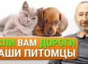 Лечение собак и кошек натуральными средствами! Лесная Аптека. Особые корма и грибные препараты!