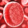 Влияние приготовленной пищи на состав крови человека