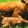 Фильм о вегетарианстве, здравомыслии и совести, фильм для зацикленных на живытных белках, мясе…