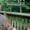 Доктор Дуглас Грэм (80/10/10) о сыроедении. Интервью взято в России. Сыроед с 78 года.