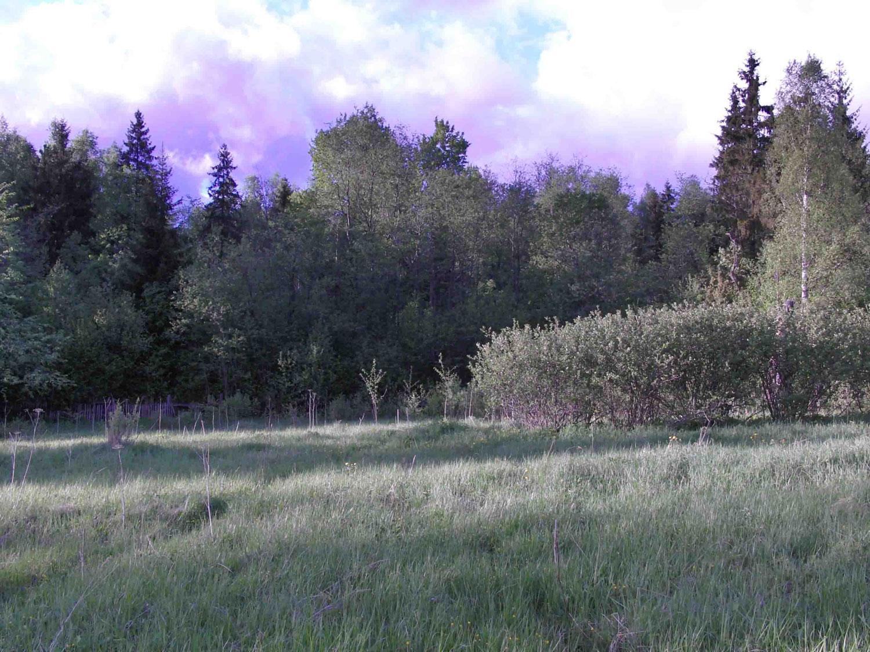 Вид от моего дома на лес